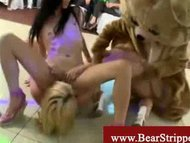 Tipsy partygirls wrestling with a bear